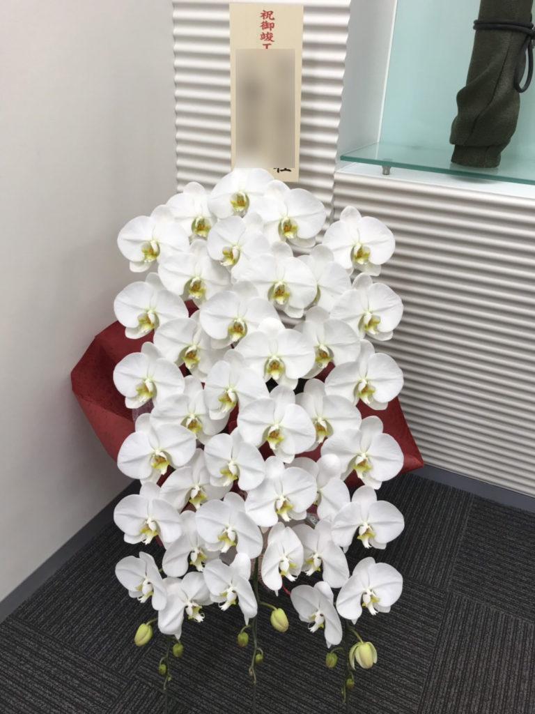胡蝶蘭3本立赤系ラッピング。松庄花壇制作。