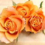 10月の誕生花オレンジバラ。