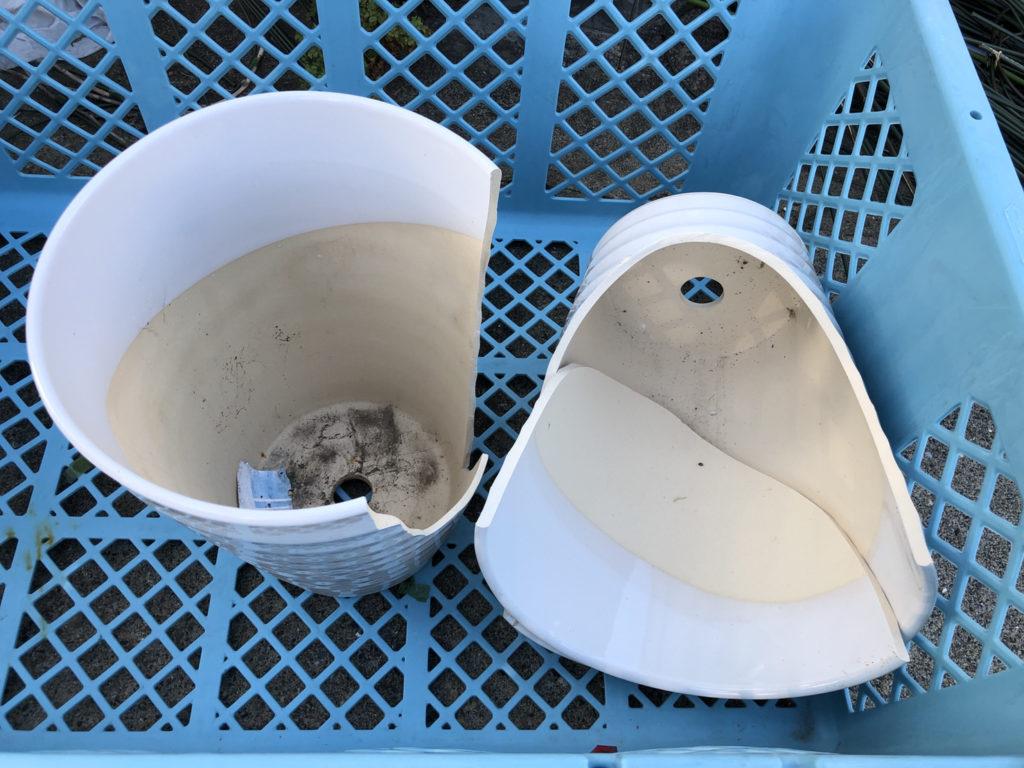 廃棄された胡蝶蘭の鉢